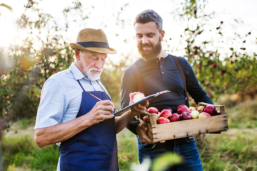 Specialized Business Insurance - A Senior Man With Adult Son Picking Apples in an Orchard in the Fall