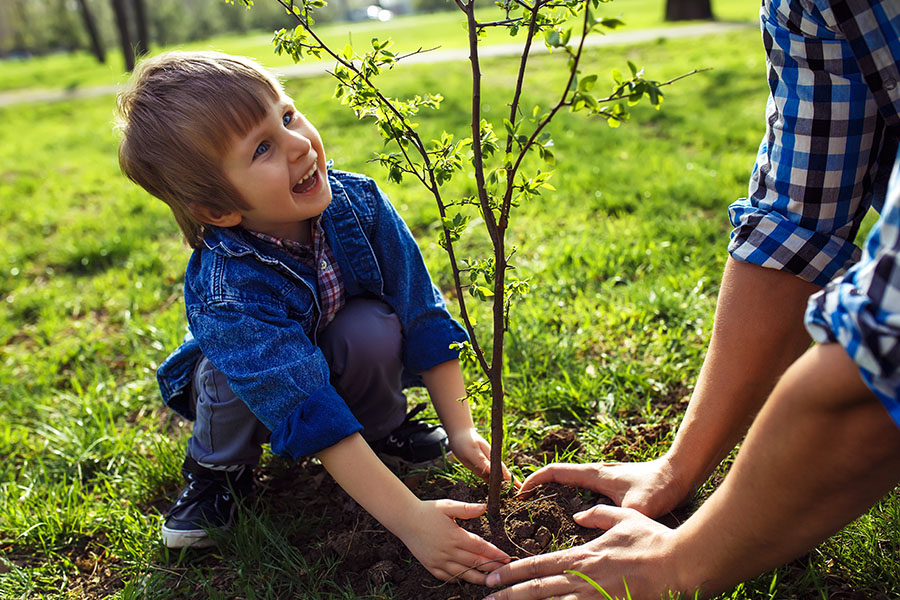 About Our Agency - Little Boy Helping his Father to Plant the Tree While Working Together in the Garden